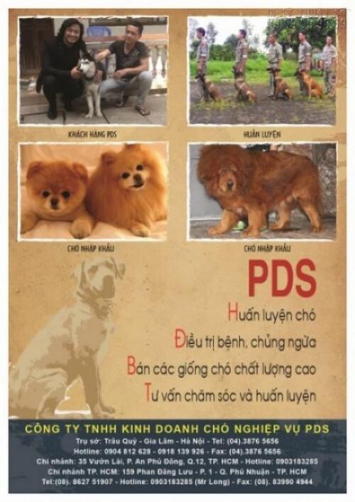 Công ty In Kỹ Thuật Số nhận in tờ rơi A4 cho Công ty TNHH Kinh doanh Chó nghiêp vụ PDS